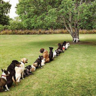 DogsQueuingForTree